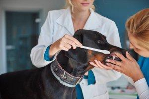 Importancia de la limpieza bucal en perros